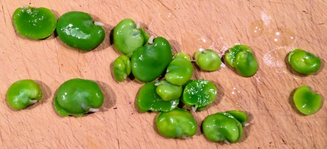 8-cooked favas-27