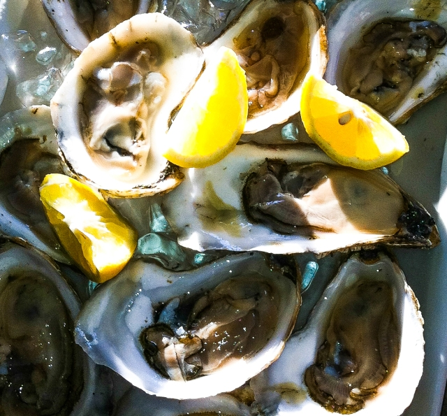 sunlit oysters with lemon - crop-06