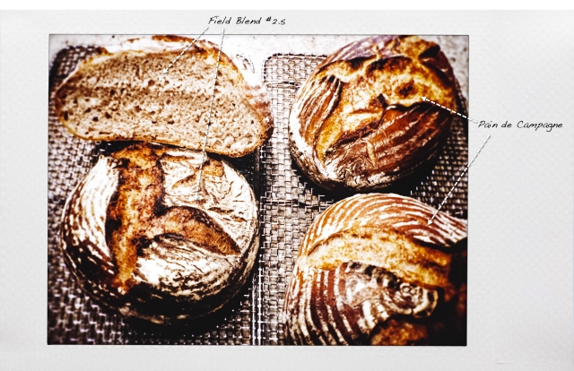 four breads-53T
