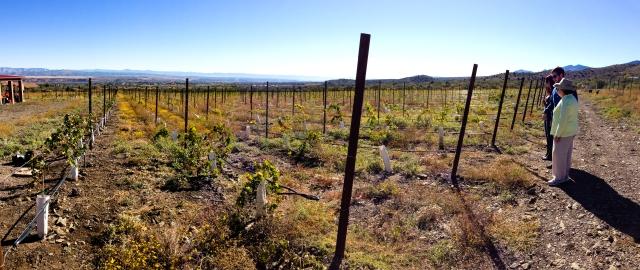 Yavapai vineyard
