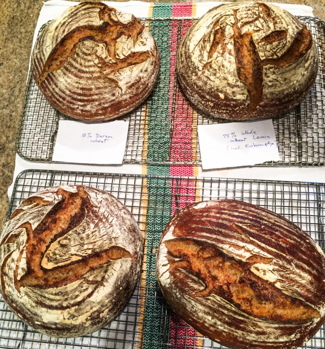 all four loaves