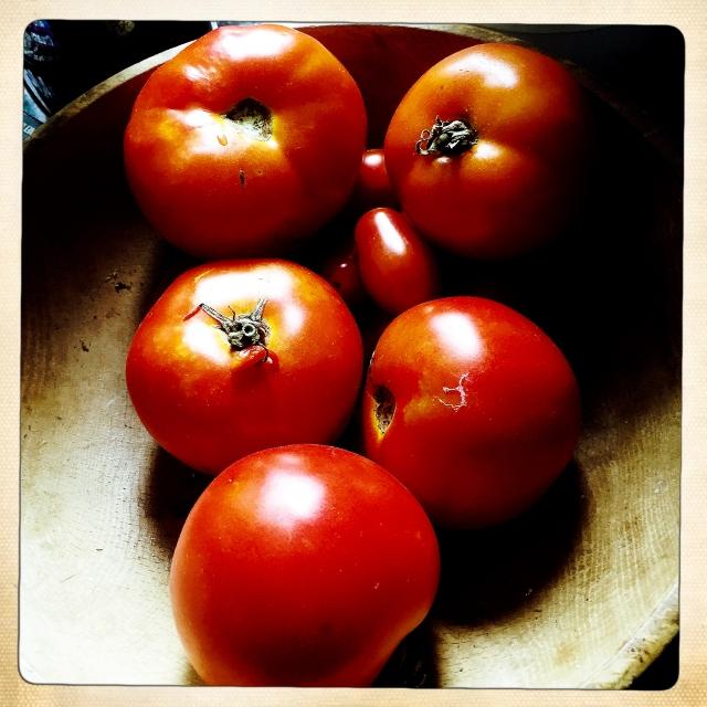 Laura's tomatoes